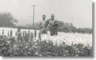 Ventura Brothers in the Flower Field, 1950's